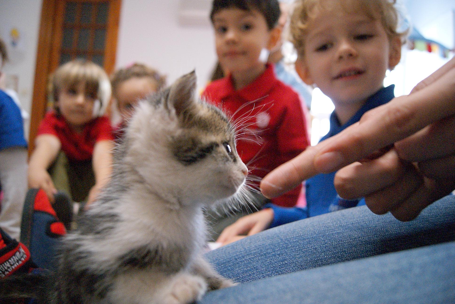pisica gradinita Acorns