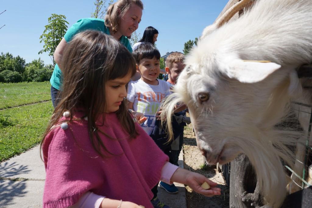 Acorns Nursery farm visit