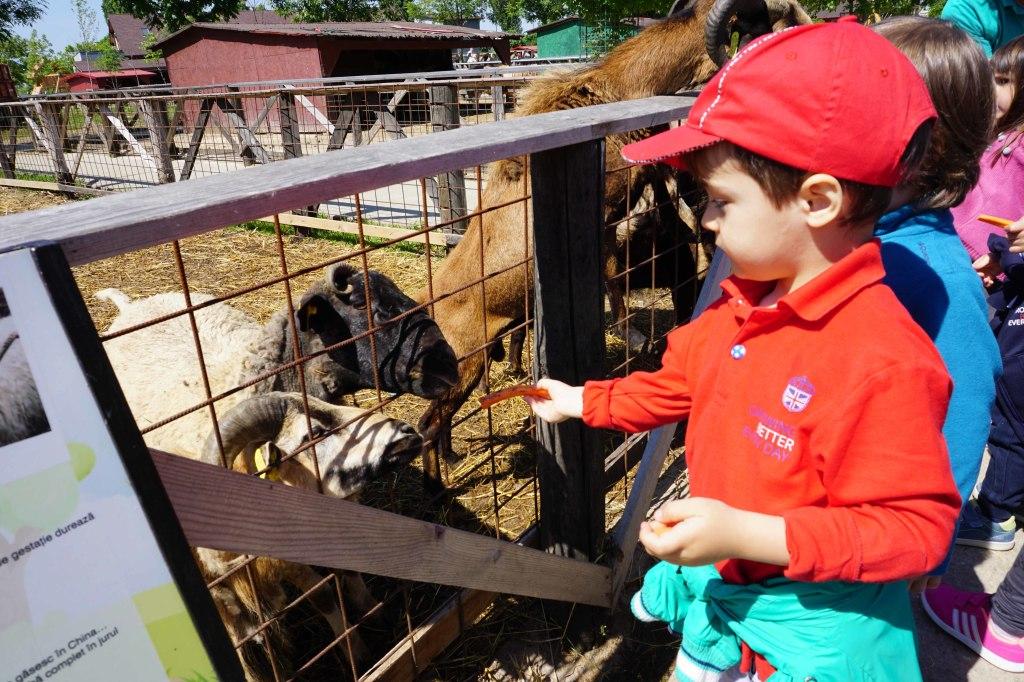 Acorns Nursery farm